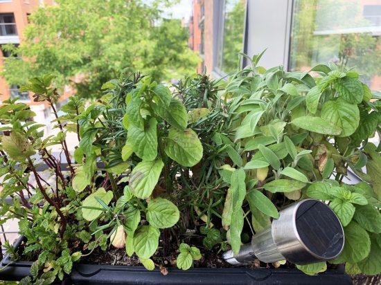 Matteos Herbs