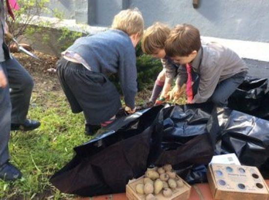Junior Sch Potatoes 3